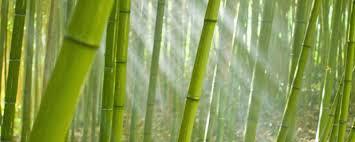 دانلود پاورپوینت بررسی تثبیت و تورم خاک رس توسط گیاه بامبو
