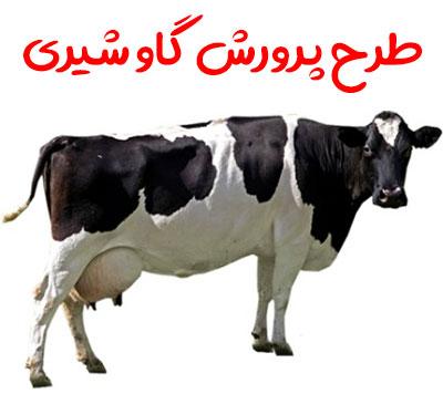 دانلود طرح پرورش گاو شیری